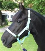 Hest til salg - Black Jack