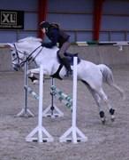 Hest til salg - PASCHA