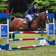 Hest til salg - UPTOWN GIRL