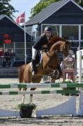 Hest til salg - AMMAN