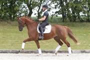 Hest til salg - CANDY H.