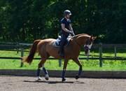 Hest til salg - ADRIANA-MARIA