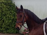 Hest til salg - PIRINI