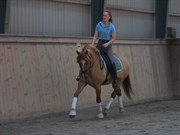 Hest til salg - ORLANDO