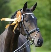 Hest til salg - KIRSTINELUNDS DONNATELLA