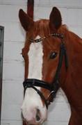 Hest til salg - SEJLGAARDS VENCENT