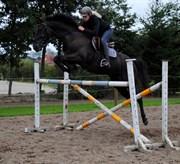 Hest til salg - CELANO