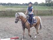 Hest til salg - NUTBOURNE PAPER MOON