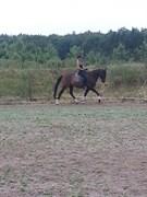 Hest til salg - MR. DELIGHT