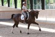 Hest til salg - Fabrix Festina