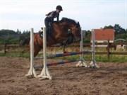 Hest til salg - JUNKER LANDIE