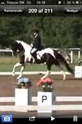Hest til salg - EMELIE