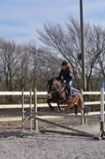 Hest til salg - DALGAARDENS MADELINE