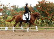 Hest til salg - DINAH DIVINE