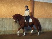 Hest til salg - LILLE DAUGÅRDS RAFAEL