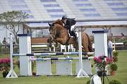 Hest til salg - Coco Jambo