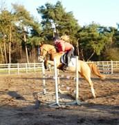 Hest til salg - Panora