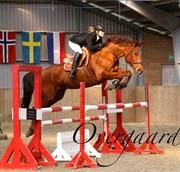Hest til salg - RED HOT CHILI
