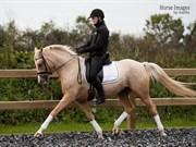 Hest til salg - NØRLUNDS LADY MIRANDA