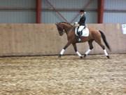 Hest til salg - BETULA - LIGHT