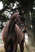 Hest til salg - GØRKLINTGÅRDS GOLD RUSH