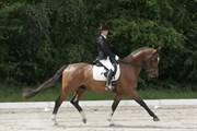 Hest til salg - ADONIS K.