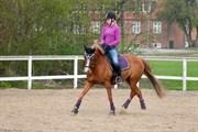 Hest til salg - MONEY PENNY