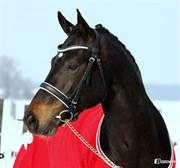 Hest til salg - VESTERGÅRDS ZEUS