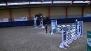Hest til salg - LANCIA II