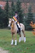 Hest til salg - Dressagepony FEI