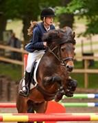 Hest til salg - LUNDEMARKGÅRDS HOKUS POKUS