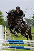 Hest til salg - Boy