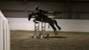 Hest til salg - KALBYGÅRD'S RONJA