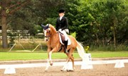 Hest til salg - Hesselteich´s Davenport