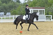 Hest til salg - ML. STOUGÅRDS BLACK BEAUTY