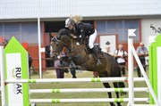 Hest til salg - SKOVLY'S ERIKA