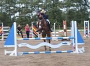 Hest til salg - CHICO