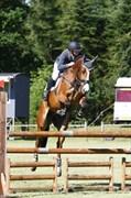 Hest til salg - GOODWILL