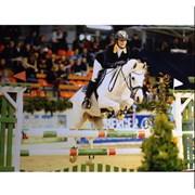 Hest til salg - BODYGUARD