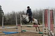 Hest til salg - VANESSA'S VIOLA