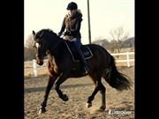 Hest til salg - TJØRNELY´S SAVANHA