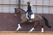 Hest til salg - TOUGAARD LENNOX