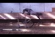Hest til salg - CONFETTI
