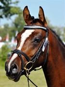Hest til salg - Lykkehøjs Aya