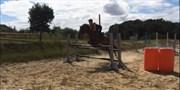 Hest til salg - DEBBIE