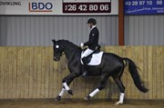 Hest til salg - FÆLDGÅRDENS DIA-TRIA