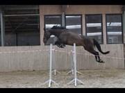 Hest til salg - LET´S FLY 8