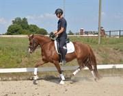 Hest til salg - MAIA STENGAARD