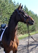 Hest til salg - KORSLUNDS LA PÉTITE SOEUR