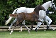 Hest til salg - 400 - JN'S ROLLERGIRL